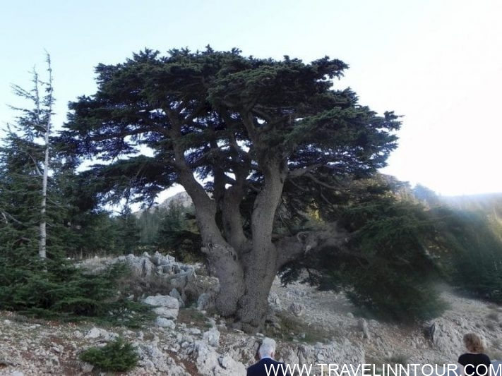 Al Barouk Cedar Forest, Lebanon - Lebanon Travel Guide
