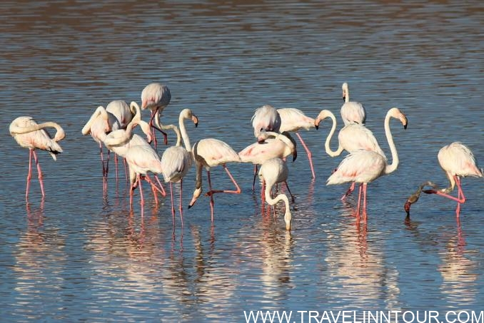 Coto de Donana- wildlife site