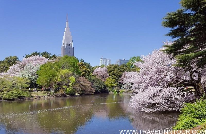 Shinjuku Gyoen Park - Tokyo Travel Guide