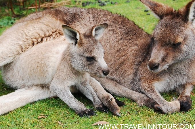 Roo Ranch - kangaroos