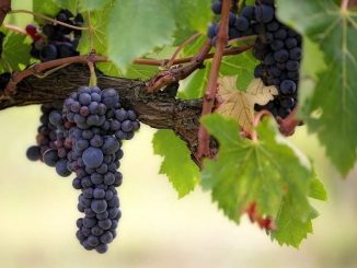 Best Wineries In USA to Visit