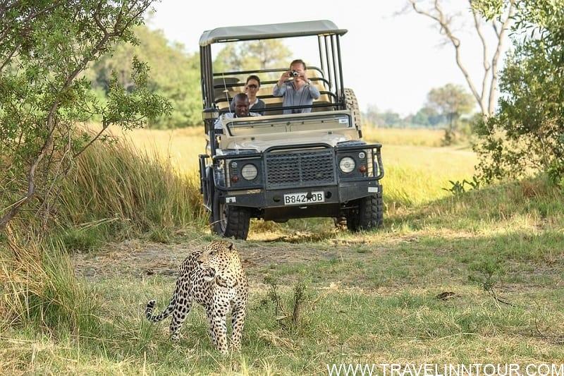 leopard-safari vacation in Africa