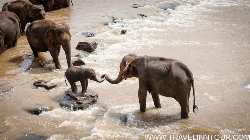 Elephants - safari vacation in Africa
