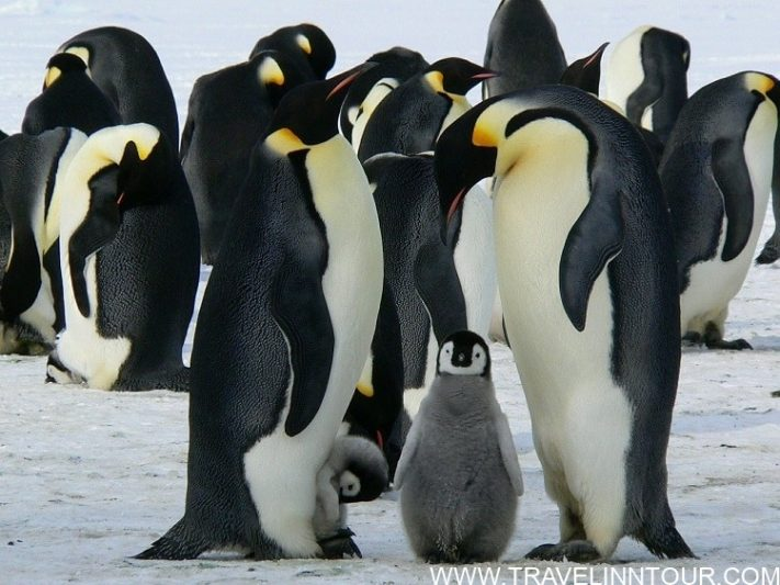 Winter With Emperor Penguins In Antarctica 1