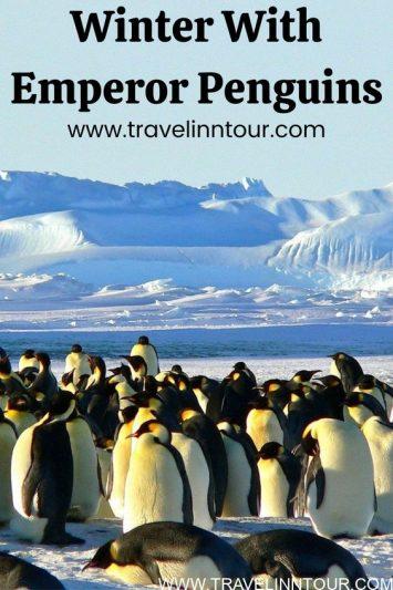 Winter With Emperor Penguins In Antarctica