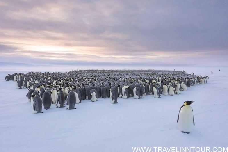 Winter with penguins in Antarctica 7