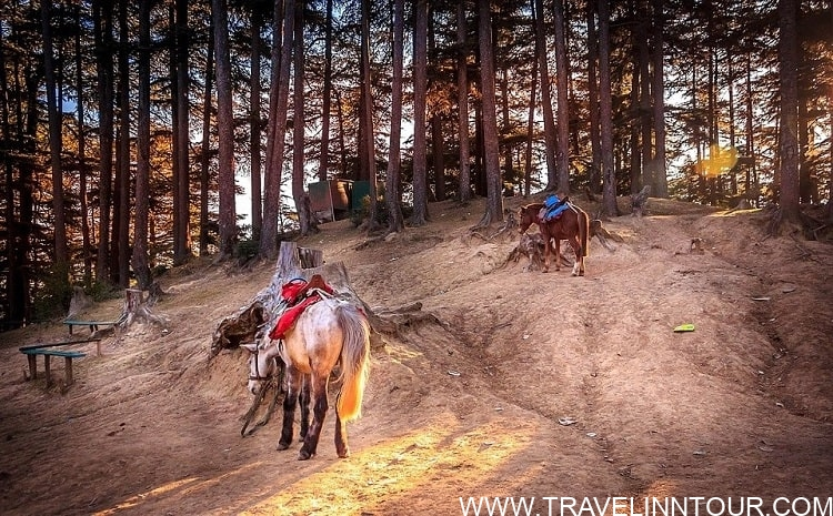Horses saddled up for riding Himachal Pradesh 1