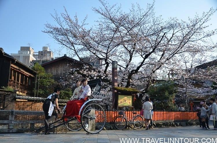 Japan Kyoto Sakura Spring