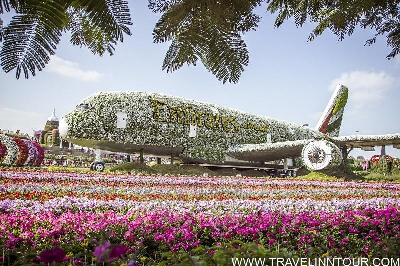 Miracle Garden Dubai Flowers